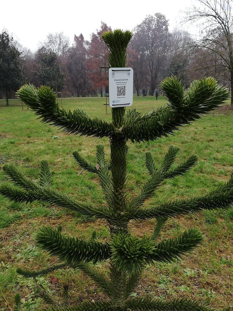 Arboreto di Parco Testori
